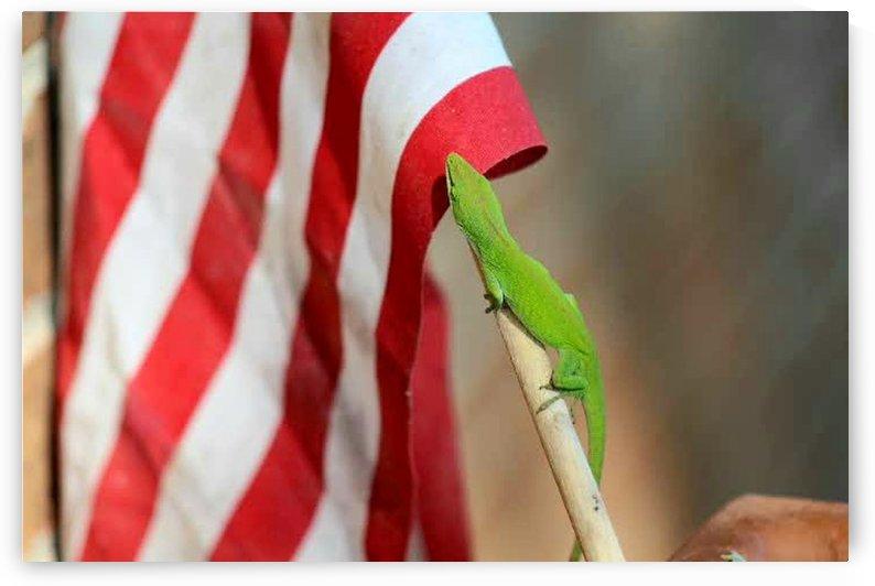 Patriotic Lizard by Kate Jaxxon