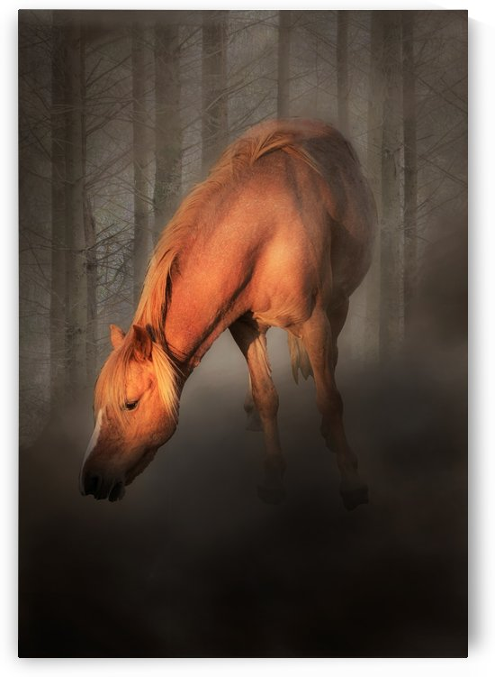 Horse in the mist by Leighton Collins