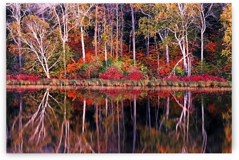 The Magical Season by Deb Oppermann