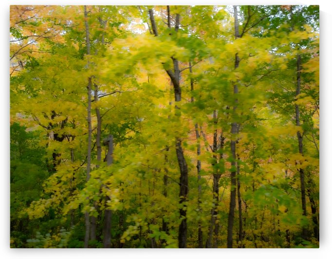 NH Foliage 1 by Dave Therrien