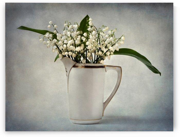 White by Barbara Corvino
