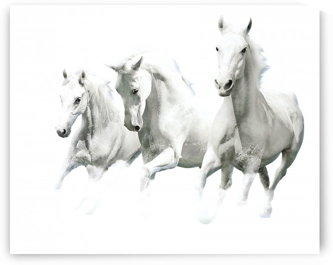 White horses by AmilenaCollection