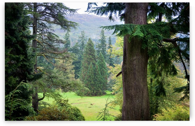 Autumnal Trees in Benmore Botanical Garden. Scotland by Jenny Rainbow