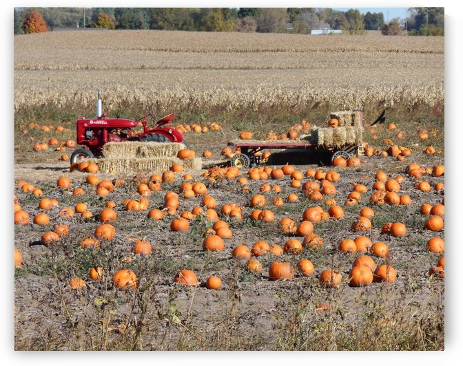 Pumpkin Patch by Castle Green Enterprises