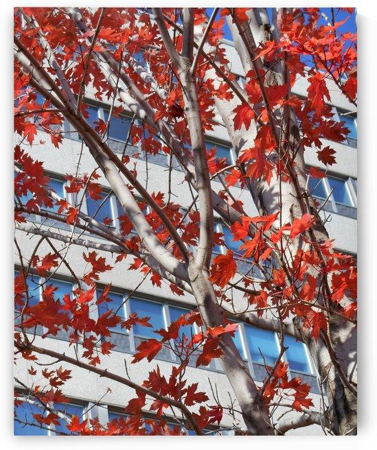 Urban Autumn by Castle Green Enterprises