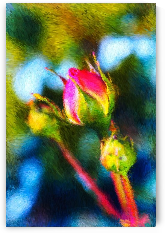 Three Rose Buds by Joy Watson