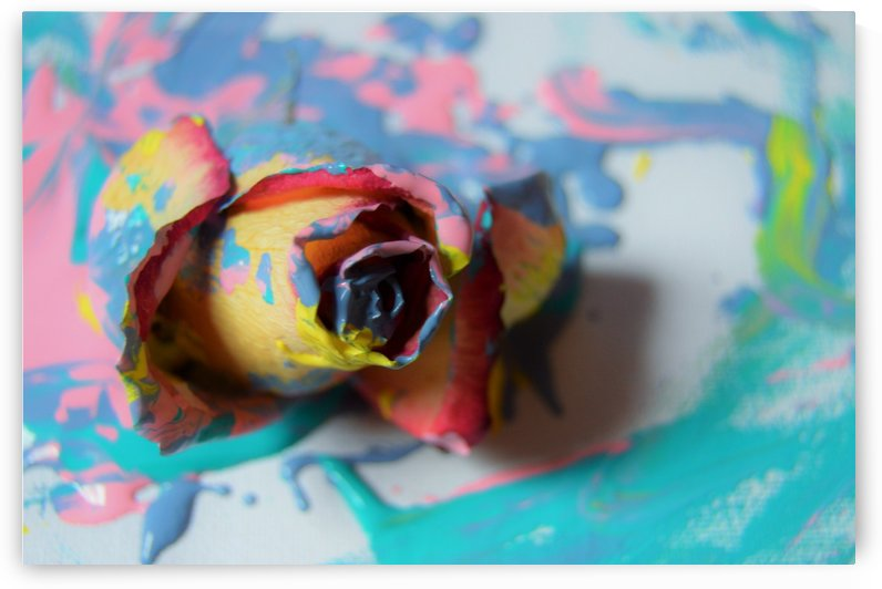Painted Roses.01 by Alexis Patten