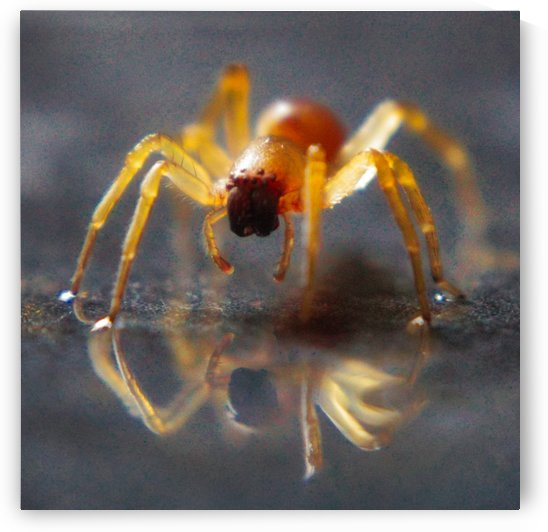 Spider reflecting by Andy Jamieson