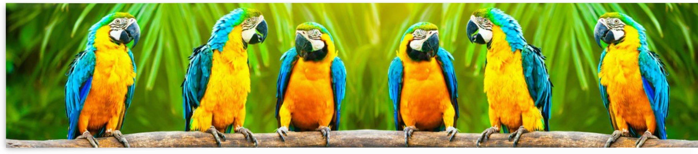 Parrots talk by AmilenaCollection