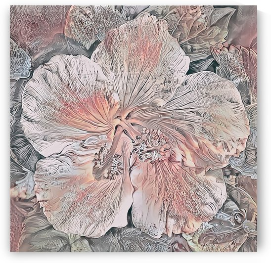 Dusty Pink Hibiscus Square by HH Photography of Florida