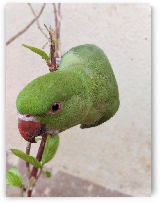 Cute Parrot by rizu_designs