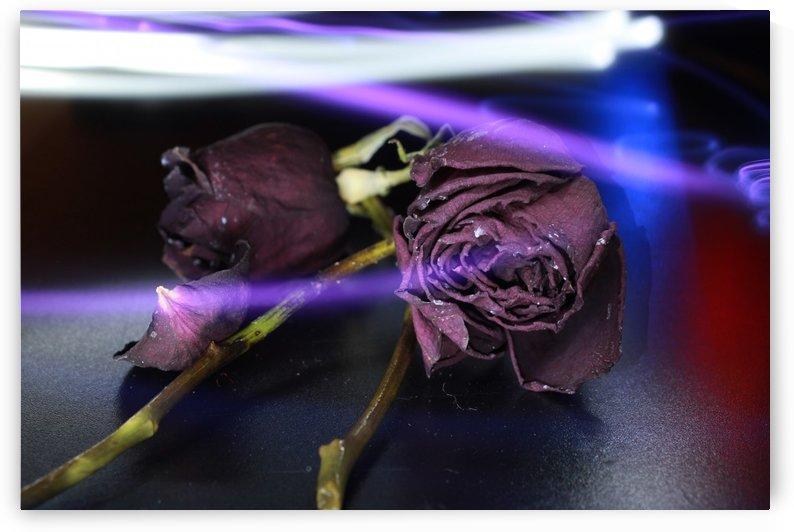 L Rose by Fernando Pichardo