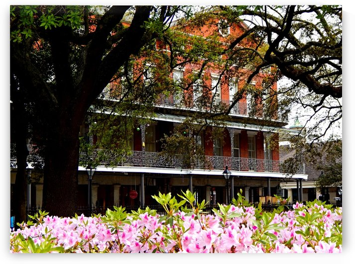 Springtime in New Orleans by Shadow and Form