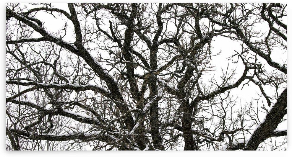 snowy tree by Joe Riederer