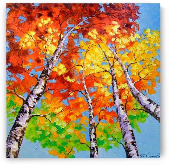 Sky birch by Olha Darchuk