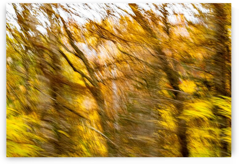 Foliage Blur by Dave Therrien