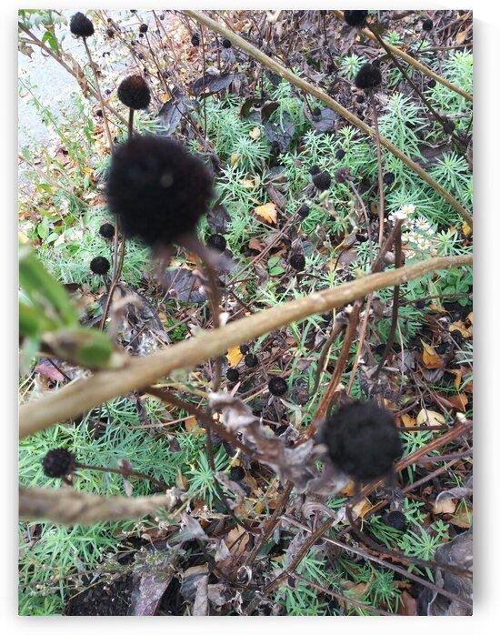 Dark Fuzzy Wuzzy Plant. by Michelle Ramos