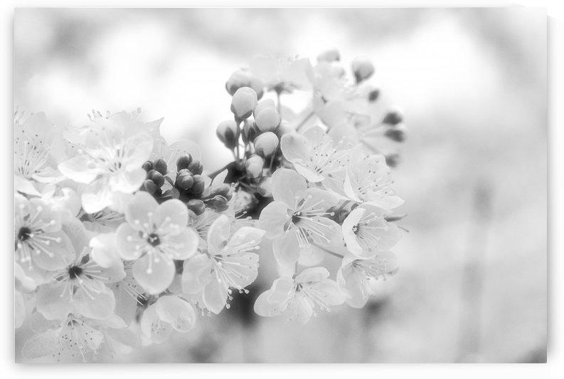 Romantic Wedding Flowers by Joy Watson