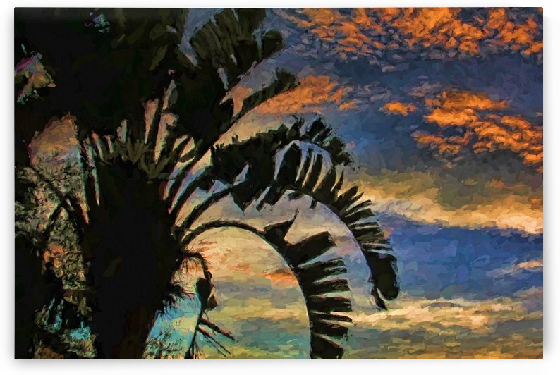 Palm Silhouette Sunset  by HH Photography of Florida