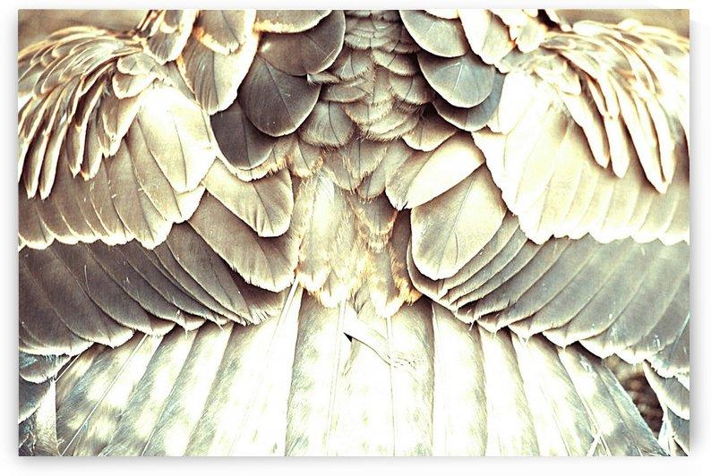 angel wings by Bratty ART