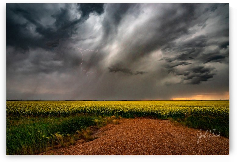 Canola Lightning   Hi Res   A3 by Joel Fabrick
