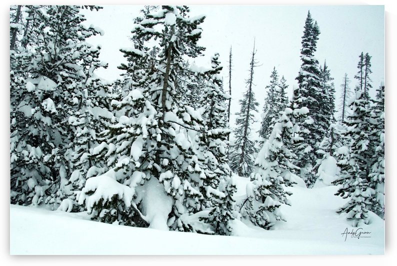 Trees in the Snow by Andy Griner