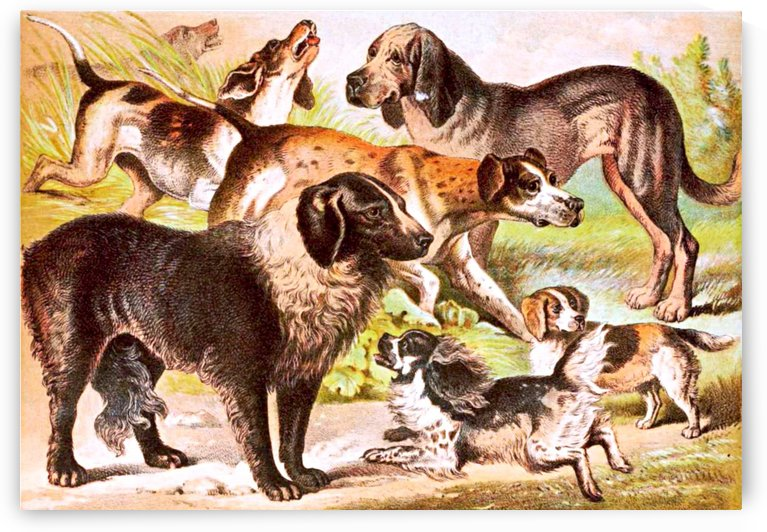 Vinatge Dog Collection Painting by Smithson