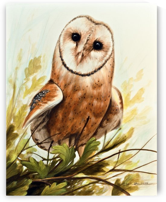 owl canvas by CRB