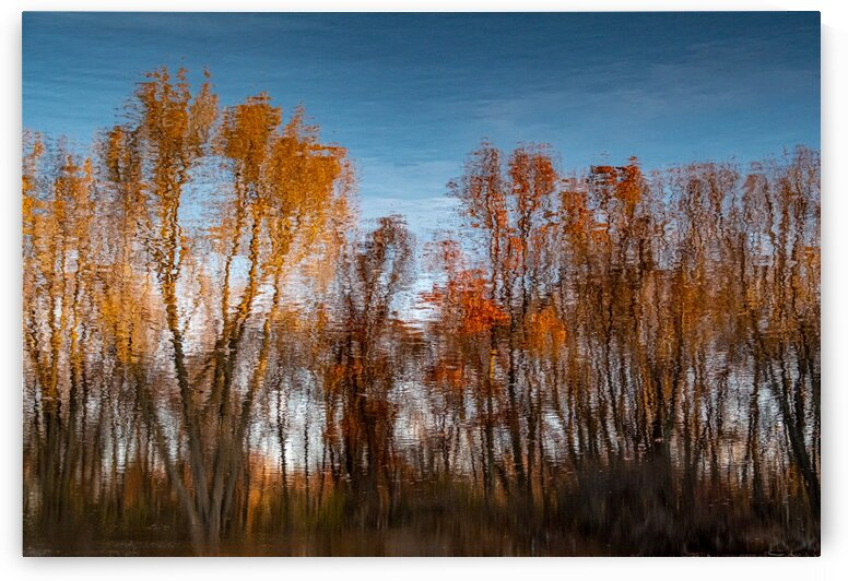 Foliage Reflection 1 by Dave Therrien
