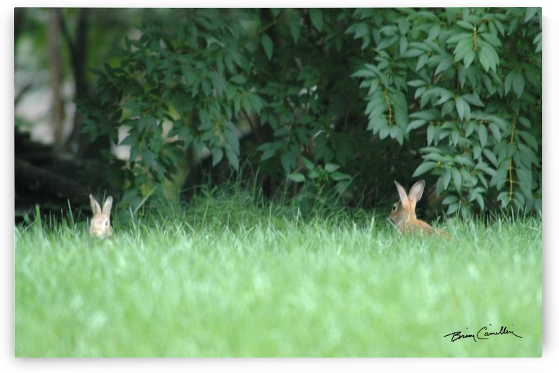 Bunnies Two by Brian Camilleri Photography