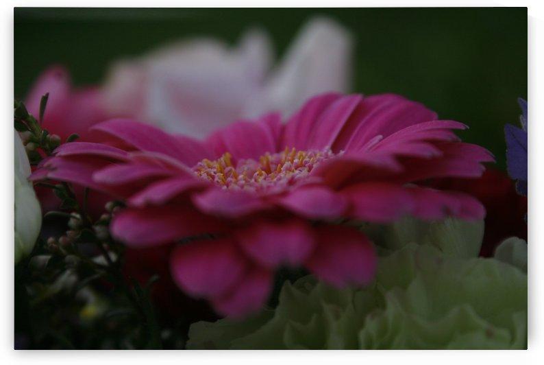 Spring Flower by Rachel Niven