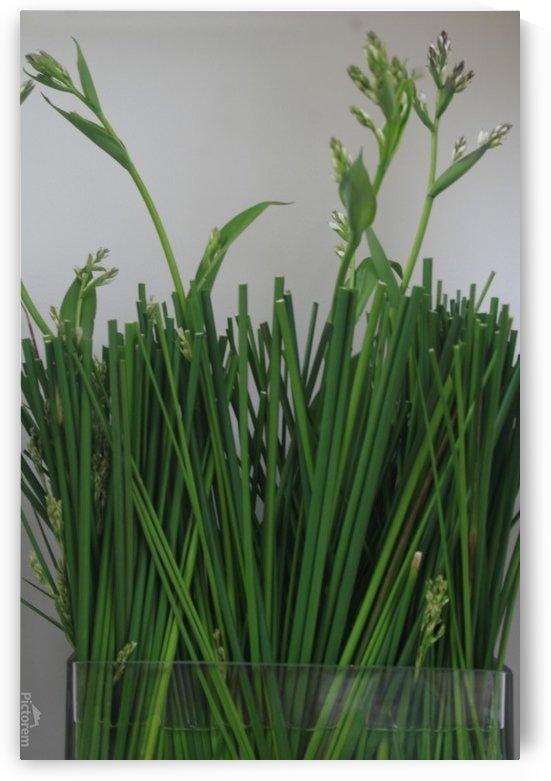Grasses by Rachel Niven