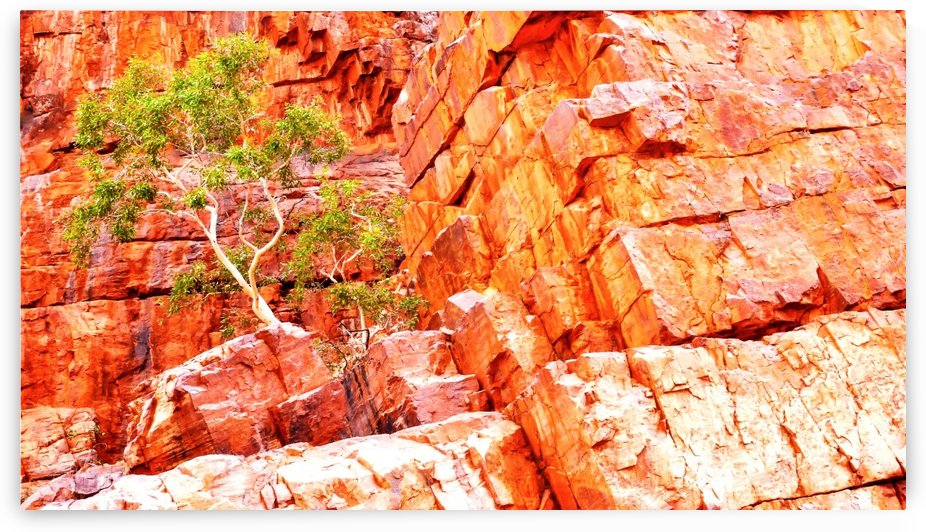 Growing in the Rocks - Ormiston Gorge 2 by Lexa Harpell