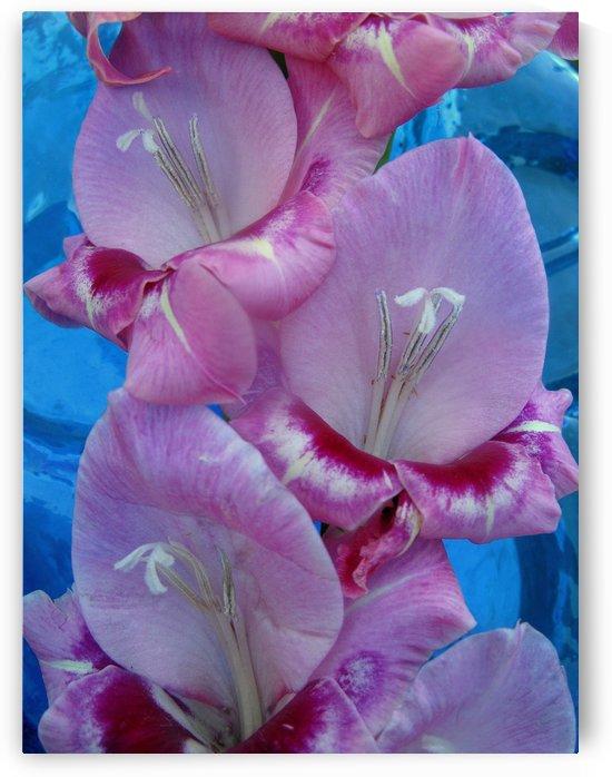 Petals O Bluezett by Brett Noel