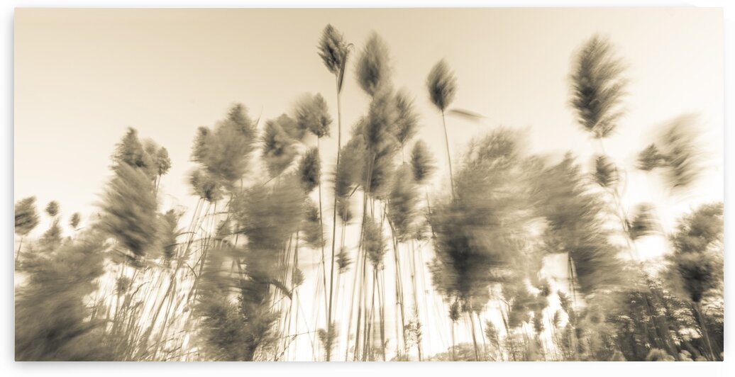 Standing up to the Wind 2 by Dave Therrien
