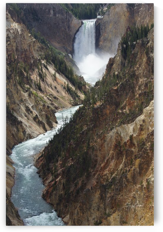 Yellowstone  Lower- Falls by Andy Griner