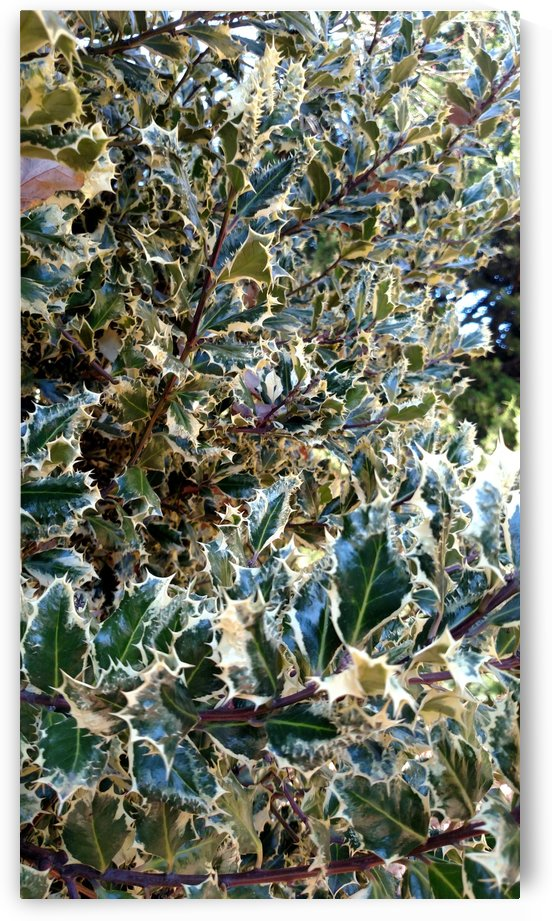 Christmas leaves by Betsi Williston