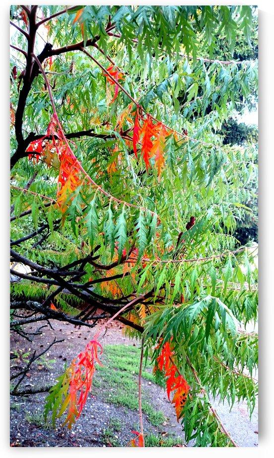 Rasta Leaves by Betsi Williston