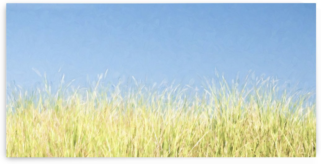 Dune Grass  by Lee Fortier