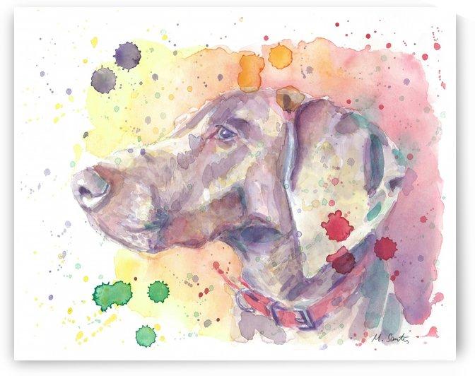 Weimaraner Dog - Portrait of Nandi by Marie Santos - M Santos Art