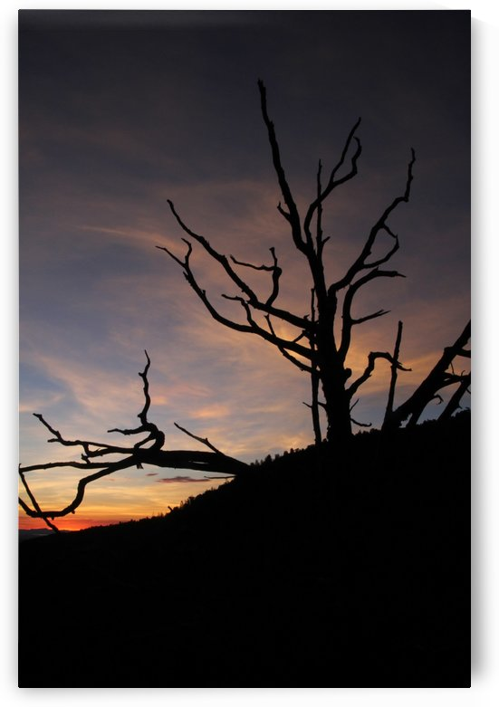 New Mexico Sunrise by Bob Vogt