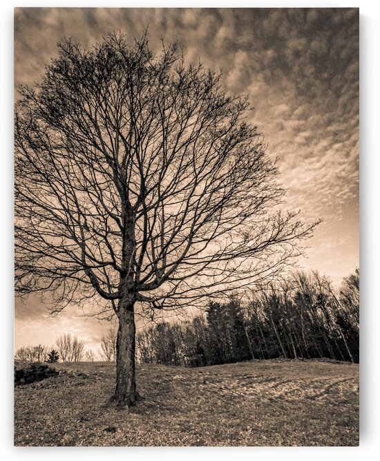 New Hampton Winter by Dave Therrien