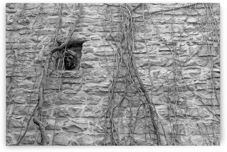 Hiding Behind the Vines B&W by Gods Eye Candy