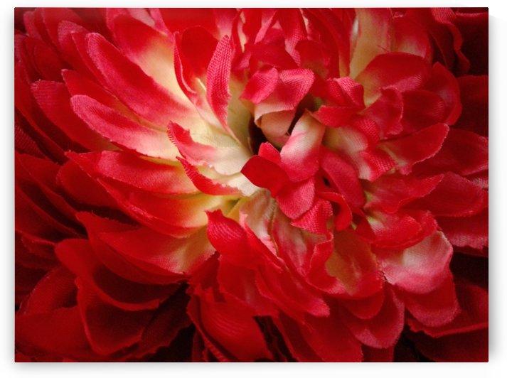 Beautiful flower by RollaD