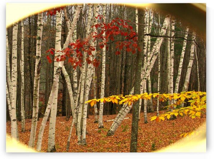Forest Dance by Brett Noel