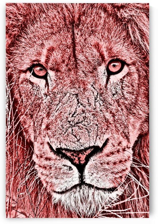 Male Lion Face thula art 3 by Thula-Photography