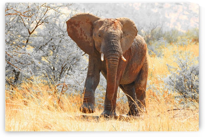 Elephant Bull 2722 CK by Thula-Photography