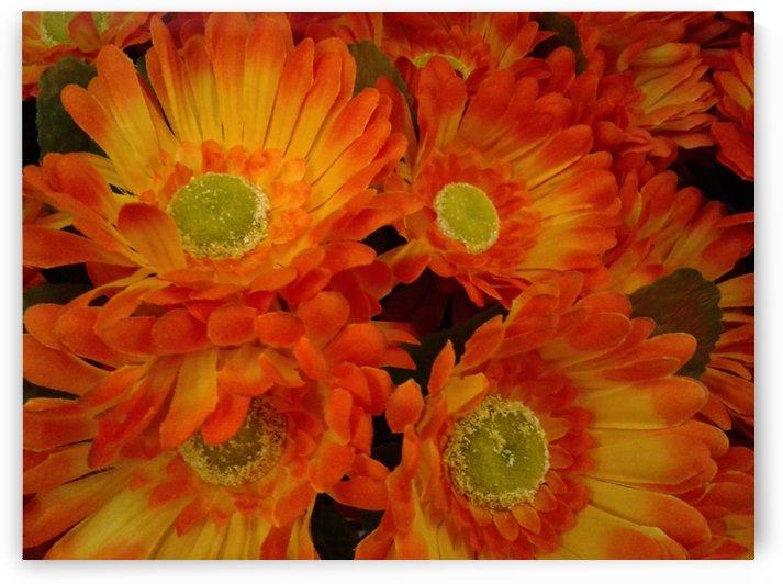 Orange flowers by RollaD