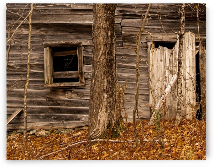 Abandoned Shack 5 by Dave Therrien
