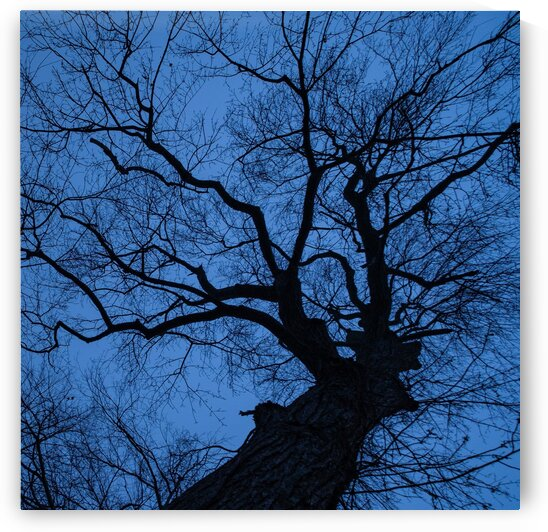 Skyward in Winter by Dave Therrien
